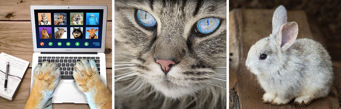 Haustierservice – Tierbetreuung Haushaltsnahe Dienstleistungen